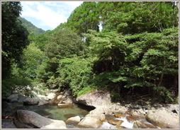 山林内にある渓流(妙山林)