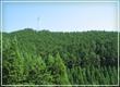 所有山林の紹介
